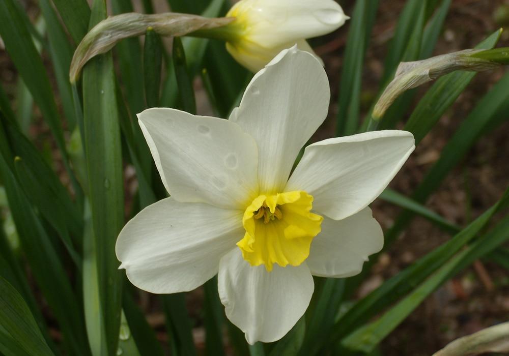 COVID-19 Spring Garden
